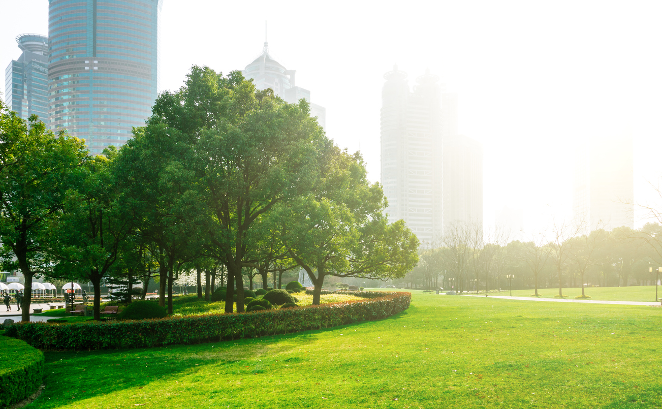 Photograph of a city park, with grass and trees in the foreground and skyscrapers visible in the background.